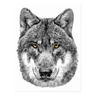 Loup gris carte postale