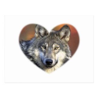 Loup gris cartes postales