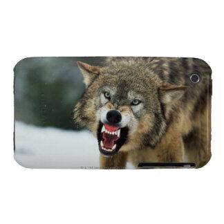 Loup gris de grondement coque Case-Mate iPhone 3