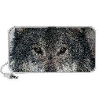 Loup gris haut-parleur