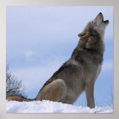 "Le projet ""Wolf'"
