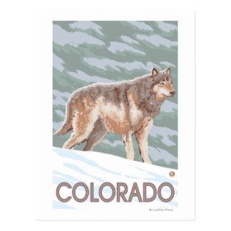 Loup gris StandingColorado Cartes Postales