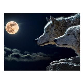 Loups de loup hurlant à la pleine lune la nuit carte postale
