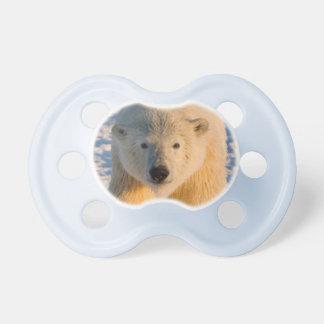 l'ours blanc, maritimus d'Ursus, polaire Tétines Pour Bébé
