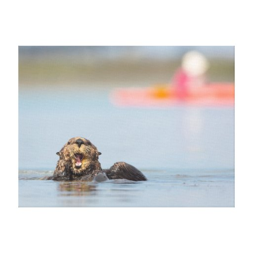 Loutre de mer adulte masculine dans Elkhorn Impressions Sur Toile