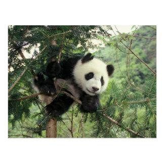 L'petit animal de panda géant grimpe à un arbre, carte postale
