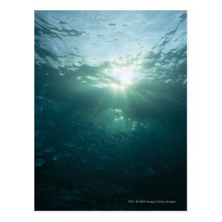 Lumière brillant sur le récif coralien et l'école cartes postales