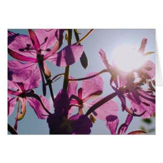 Lumière du soleil par la carte de voeux de fleurs