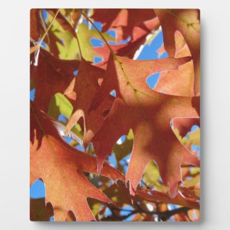Lumière du soleil par le feuille d'automne plaque d'affichage