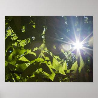 Lumière du soleil par les arbres affiche