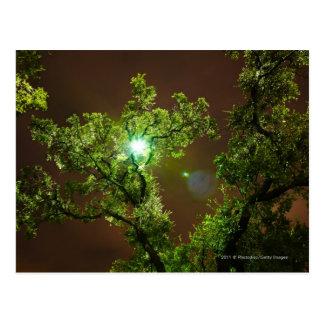 Lumière par des arbres la nuit cartes postales