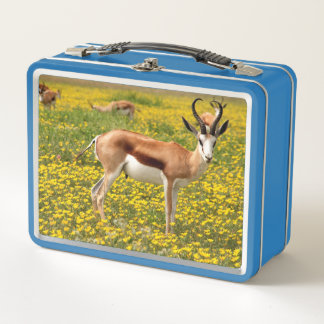 Lunch Box Antilope