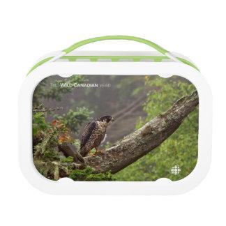 Lunch Box Chute - faucon pérégrin