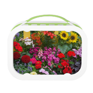 Lunch Box Clôture jaune avec le jardin d'agrément dedans