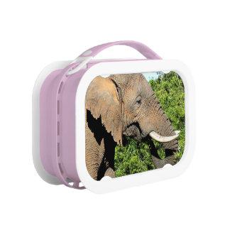 Lunch Box Consommation d'éléphant africain