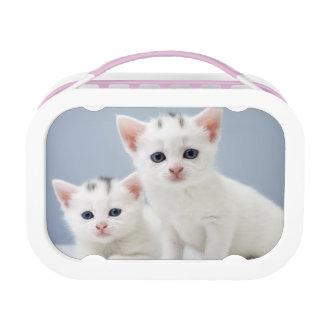 Lunch Box Deux chatons blancs très jeunes regardent fixement