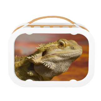 Lunch Box Dragon barbu (Pogona Vitticeps) sur la branche,