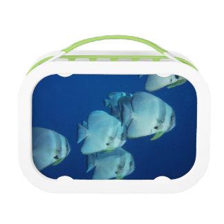 Lunch Box École des poissons
