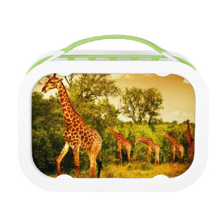 Lunch Box Girafes sud-africaines