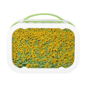 Lunch Box Gisement jaune de tournesol