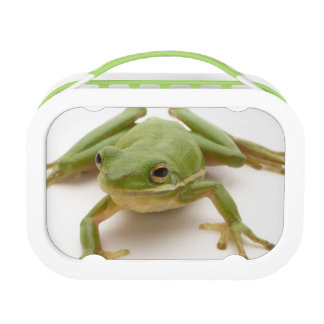 Lunch Box Grenouille d'arbre verte