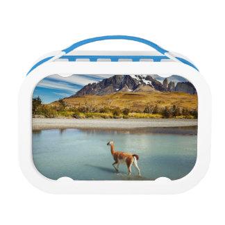 Lunch Box Guanaco traversant la rivière en Torres del Paine