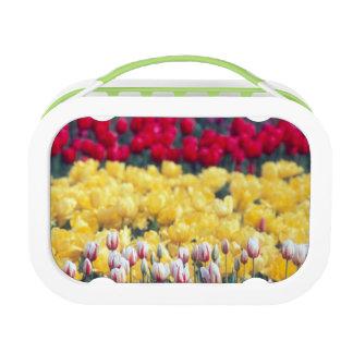 Lunch Box Jardin d'affichage de tulipe dans la vallée de Ska