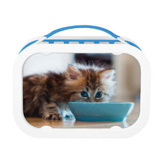 Lunch Box Jeune chaton persan