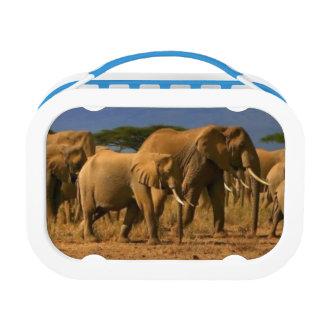 Lunch Box Kilimanjaro et éléphants