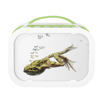 Lunch Box la grenouille sautant et plongeant dans l'eau
