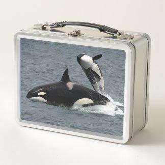 Lunch Box Orque