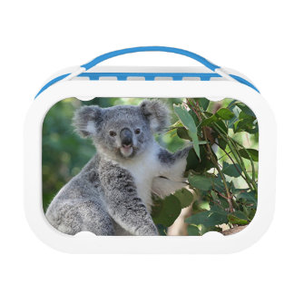 Lunch Box Panier-repas australien mignon de koala