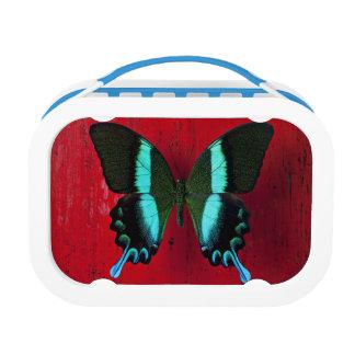 Lunch Box Papillon noir et bleu sur le mur rouge