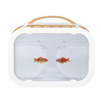 Lunch Box Poisson rouge dans des bocaux à poissons distincts