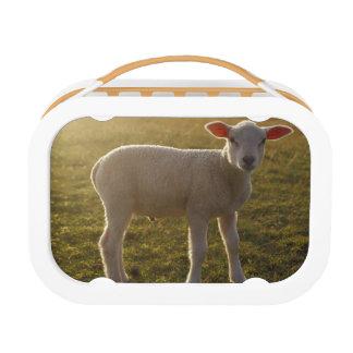 Lunch Box Un agneau à l'arrangement du Sun Suède
