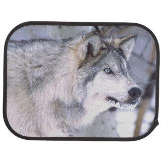 Lupus de loup, de Canis de bois de construction, Tapis De Voiture