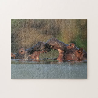 Lutte d'hippopotames (hippopotame Amphibius) Puzzle