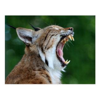 Lynx, belle carte postale de photo de chat sauvage