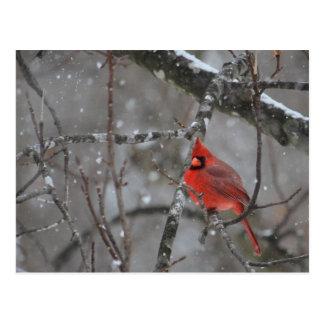 M. Cardinal - carte postale