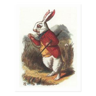 M. Rabbit ! Carte Postale