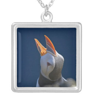 Macareux atlantique (arctica de Fratercula) 3 Collier