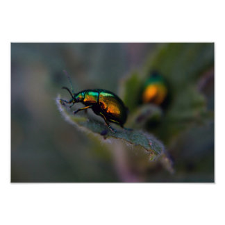 Macro brillant de scarabée posters