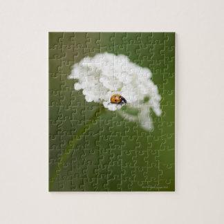 Macro image de Ladybird sur une fleur sauvage Puzzle