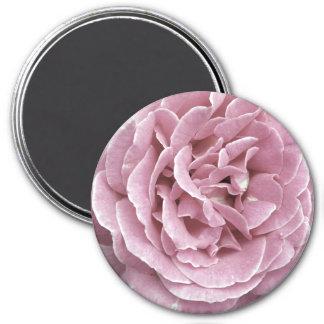 Magnet de rose de rose