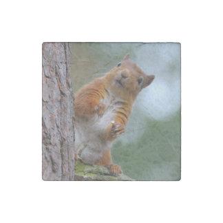 Magnet En Pierre Écureuil rouge sauvage dans la photo écossaise de