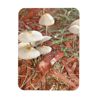 Magnet Flexible Aimant de photo de champignon