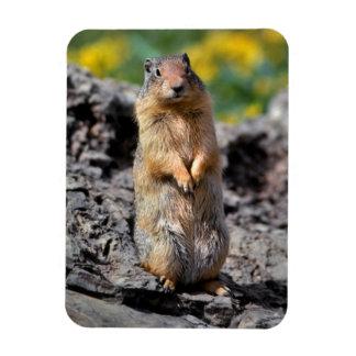 Magnet Flexible Alerte d'écureuil moulu pour le danger