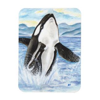 Magnet Flexible Aquarelle ouvrant une brèche la baleine d'orque