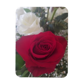 Magnet Flexible Beau rose rouge