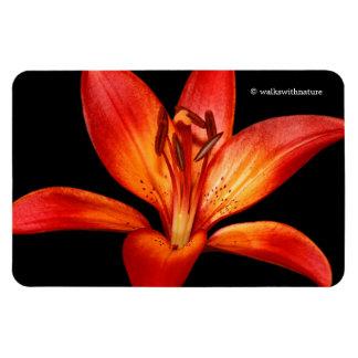 Magnet Flexible Belle mamie asiatique orange rouge Paradiso de lis